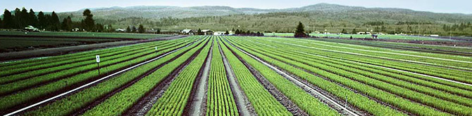 agriculture-header